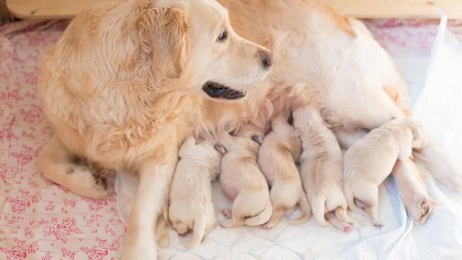O ideal é esperar o pet ter, ao menos, dois meses de vida. Se colocado para adoção antes de 60 dias, causará graves problemas psicológicos ao cão
