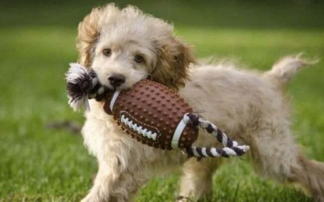 Brinquedo para cachorro: como escolher o melhor e mais seguro?