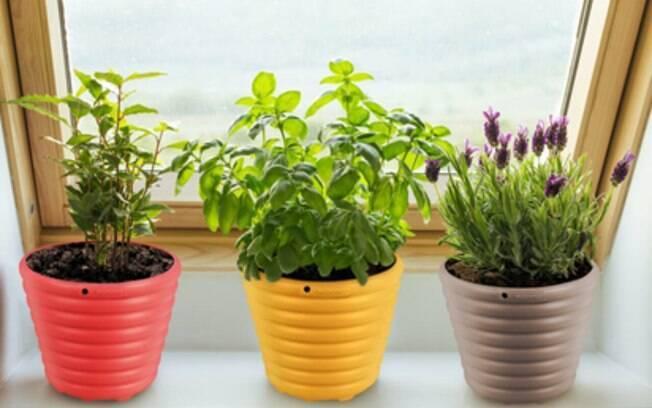 três vasos de plantas