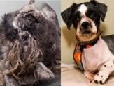 Fotos do antes e depois de animais que foram adotados