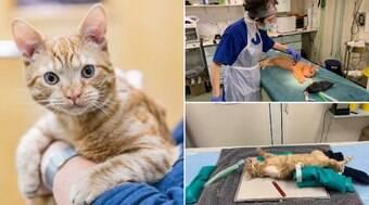 Gato que sofreu maus tratos é adotado por membro da instituição