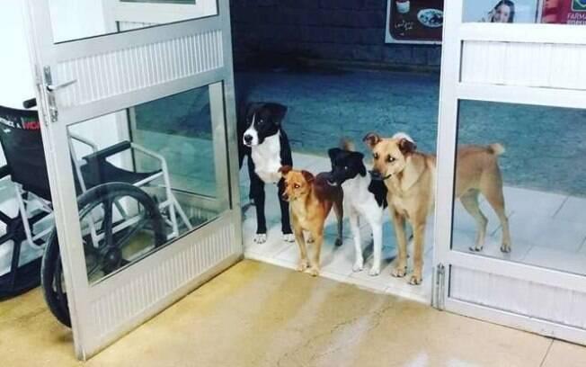 Cães aguardam em frente de hospital morador de rua receber atendimento médico em Rio do Sul, Santa Catarina