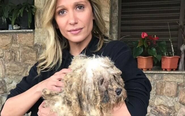 Luisa Mell resgatou 135 cães de raça de um canil recentemente