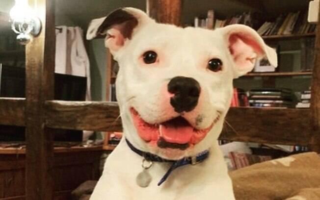 Snoop é o cão para adoção que havia sido abandonado