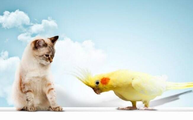 Como manter uma boa convivência entre gatos e passarinhos?