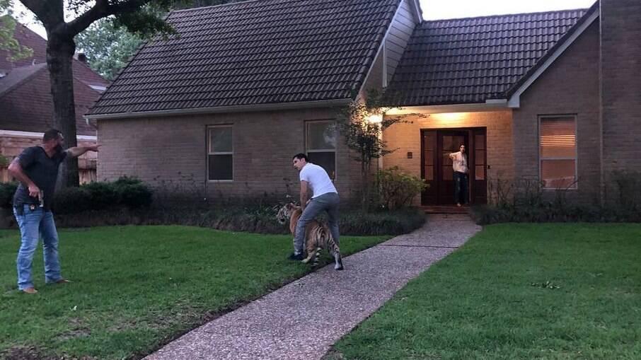Tigre caminha por bairro no Texas, nos EUA