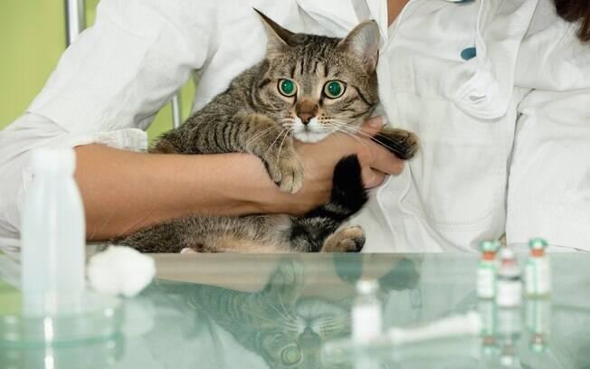 Apenas dê remédios indicados pelo veterinário.