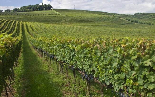 Bento Gonçalves está os destinos turísticos da Serra Gaúcha que contam com uma forte produção de vinhos