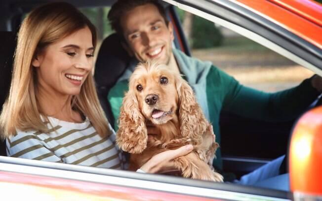 É normal o cão enjoar em viagens de carro, principalmente para os que não estão acostumados