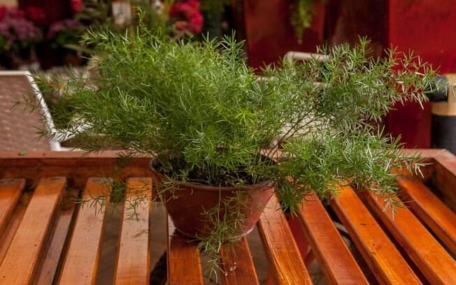 Plantas cactos e suculentas s o op es resistentes ao - Plantas para pleno sol ...