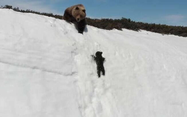 Em vídeo, urso filhote escorrega várias vezes durante tentativas de subir penhasco