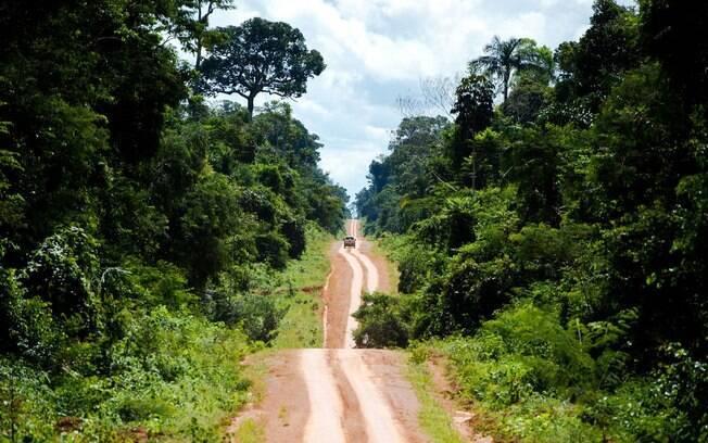 estrada de terra no meio da floresta