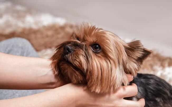 Aprenda a calcular a idade canina