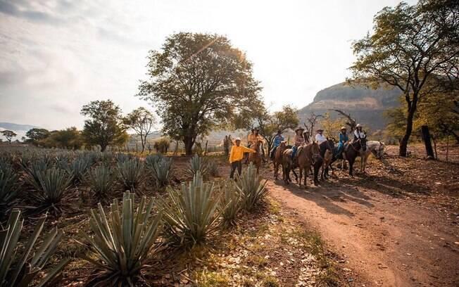 Quem ficar no barril de tequila também poderá ver de perto o processo de fabricação da bebida e cavalgar pela região