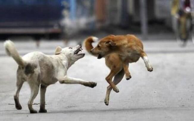 Ataque de cães ocorre desde novembro e já causou a morte de 12 crianças; moradores estão capturando os animais