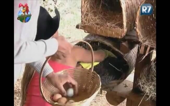 Dinei recebe ajuda da Fazendeira Valesca Popozuda no galinheiro