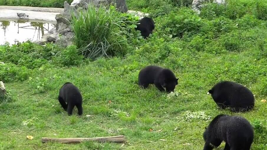 Xuan Wu Mo è stato portato al santuario degli orsi a Ninh Binh