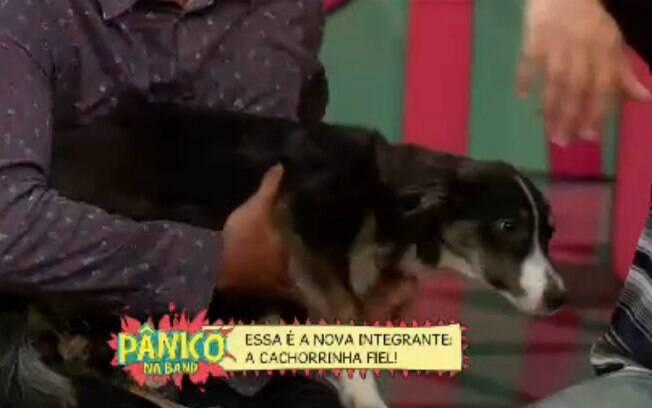 'Pânico' anunciou nesse domingo (16) sua nova integrante: a cadelinha Fiel