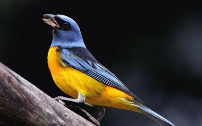 Os pássaros precisam de cuidados especiais