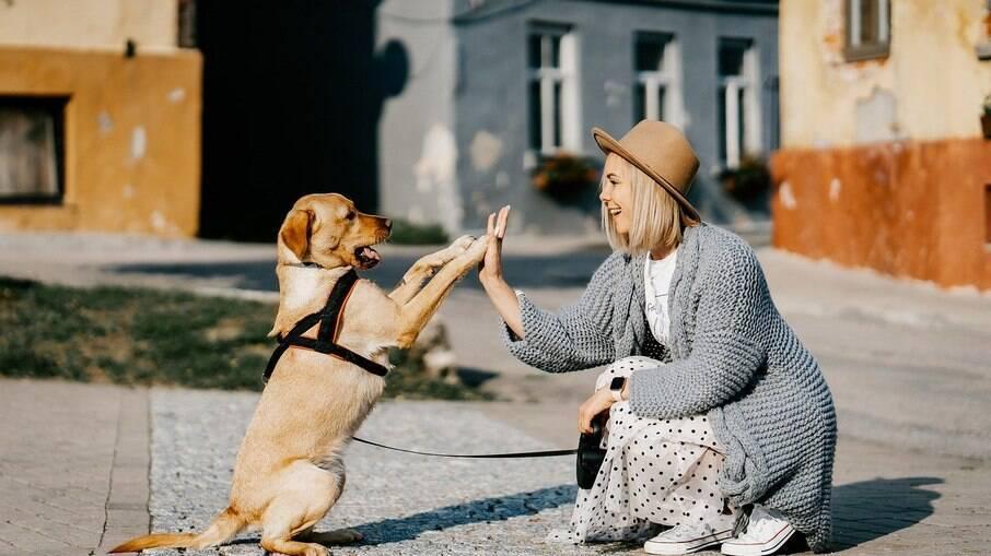 O apito pode ser utilizado para que os cães encontrem os tutores em caminhadas por locais em que estejam separados por longas distâncias, como fazendas, por exemplo