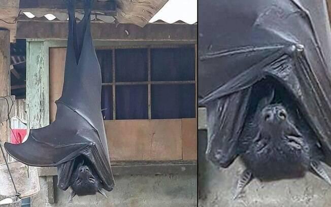 Reprodução de twitter de um morcego grande nas Filipinas