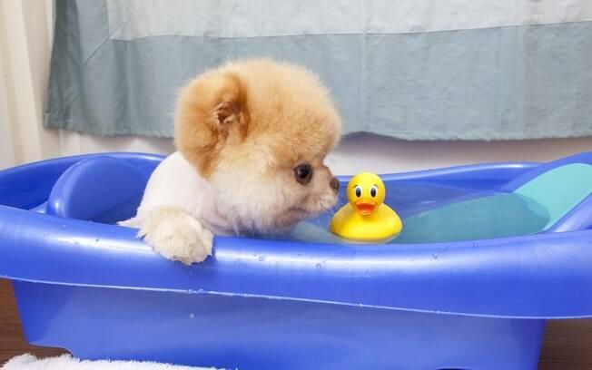 Boo gostaria de ter um pato de estimação de verdade - se pudesse apertar