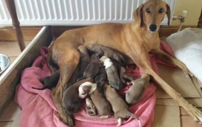 É preciso achar um local quentinho e calma para a cadela e seus filhotes