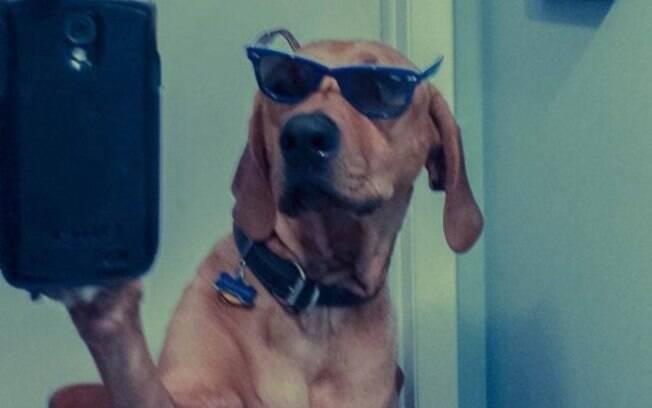 Animais também tiram selfie e fazem umas caretas ótimas