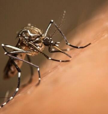 """Presidente da Fiocruz  diz que """"é quase impossível acabar com o Aedes aegypti"""""""