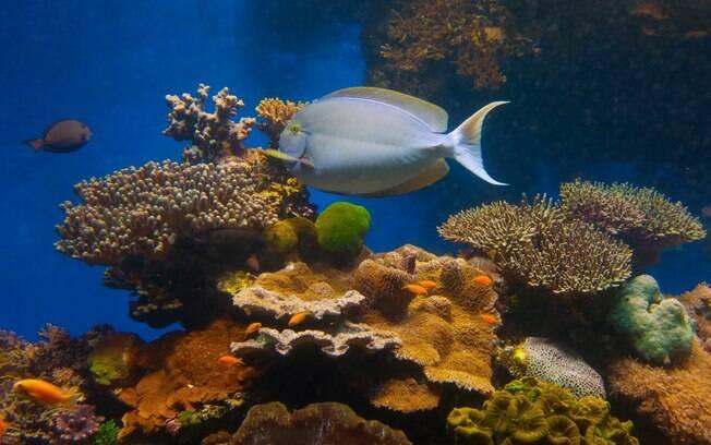 Na Praia de Coral, no litoral de Eilat, os amantes do mar também vão achar o que fazer em Israel, com mergulhos para ver de perto a vida marinha. Se prepare para ver milhares de espécies diferentes, com algumas que só existem na região