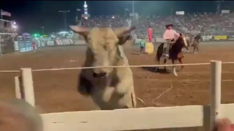 Animal foi registrado pulando nas arquibancadas em um rodeio em Preston, estado de Idaho, nos Estados Unidos