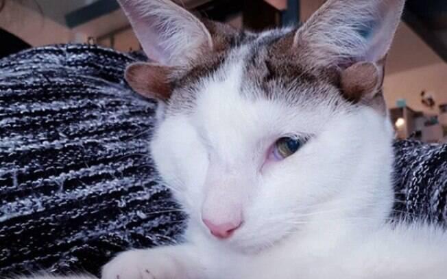 Gato com quatro orelhas