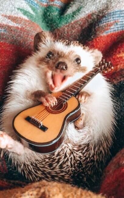 ouriço tocando mini violão