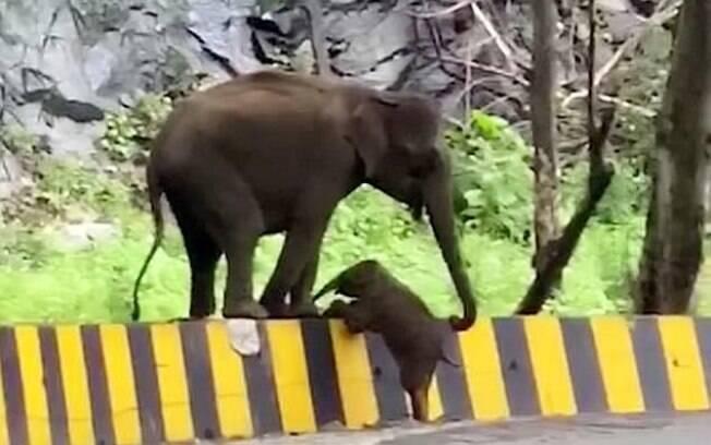 O filhote colocou as patas em cima da barreira e a mãe o ajudou a subir