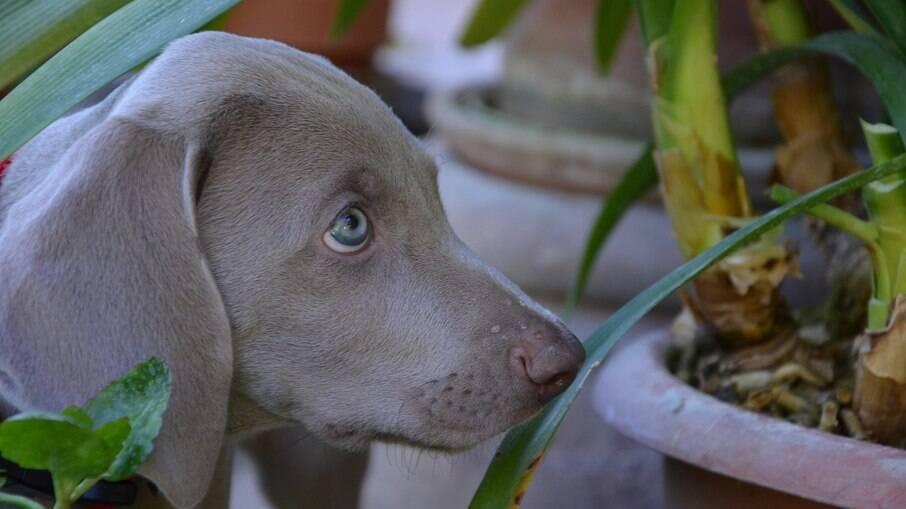 Cães podem se atrair pelas cores vivas e pelo movimento das plantas, explica veterinário