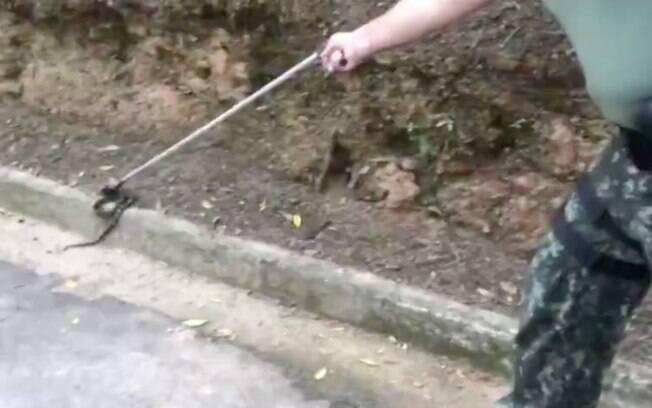 Frequentadores do parque denunciaram a presença do animal à polícia ambiental