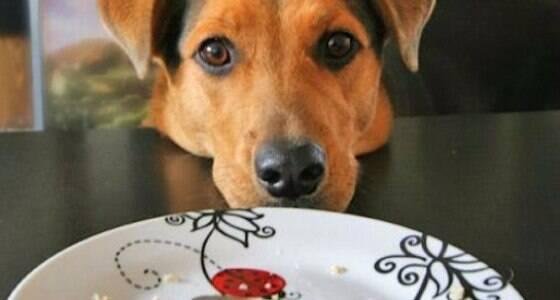 Cachorros podem comer comida humana?
