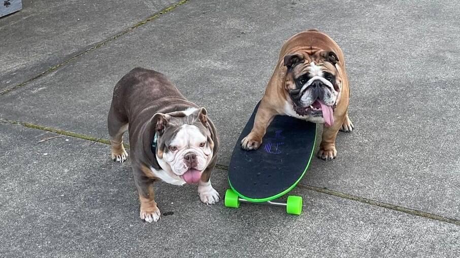Chowder, o buldogue skatista