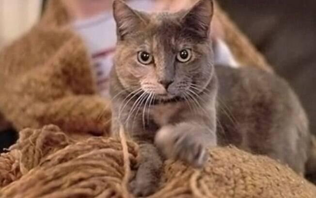 É bastante comum ver os gatos afofando o lugar que estão, mas ninguém sabe o porquê desse comportamento