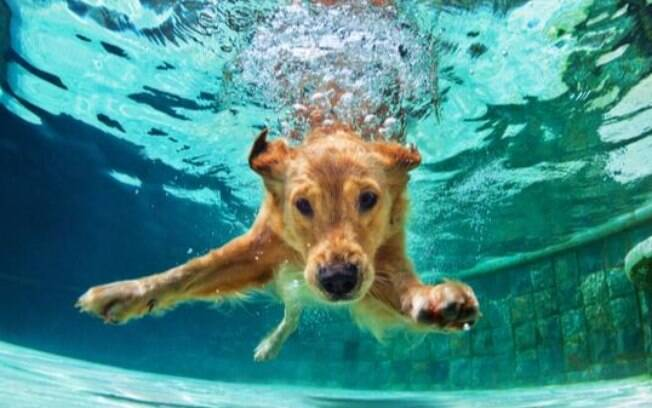 O cachorro de Sagitário: saiba as características do seu pet sagitariano