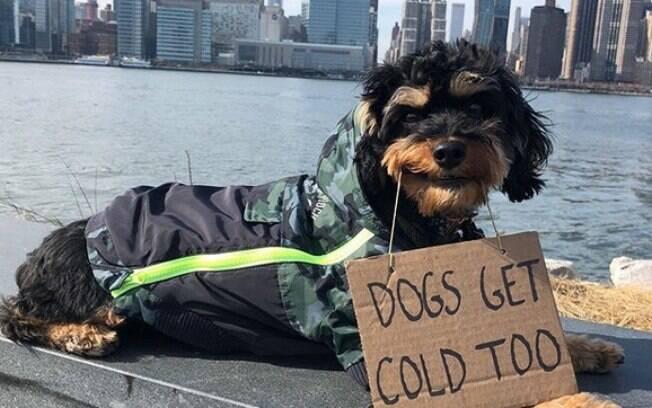 Cão com bilhete de protesto que diz: