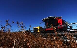 Grãos: Soja 1,38% mais cara no Paraná é destaque desta quinta-feira
