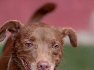 O cãozinho Bombom e outros animais poderão ser adotados na feira