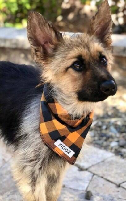 cachorro usando bandana