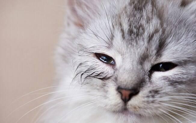 Gato testou positivo para novo coronavírus no Brasil
