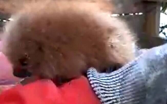Comerciantes encontram filhote de ouriço no Jardim Chapadão