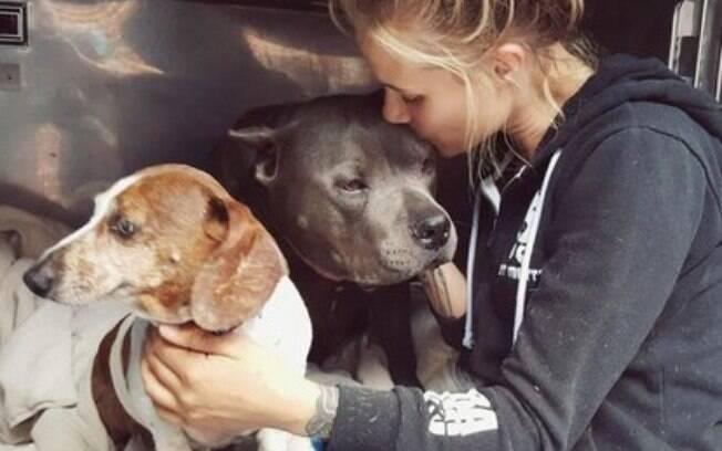 O pit bull Blue é o cão-guia e melhor amigo do dachshound cego OJ