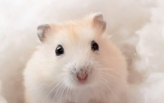há algumas maneiras específicas de se manter o hamster limpinho