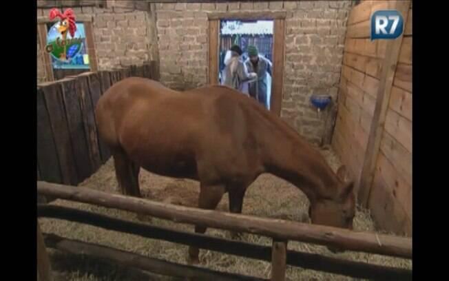 Gui Pádua ajuda Monique Evans na baia de um dos cavalos