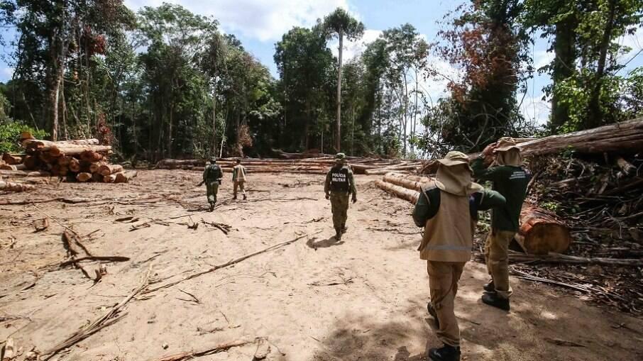 Flagrante de desmatamento pela polícia ambiental